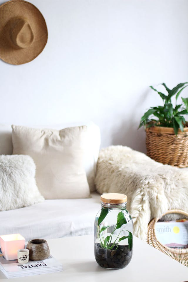 Indoor Plant Trends for 2018