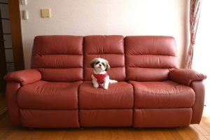 Pet-Friendly Upholstery Fabrics for Pet Owners