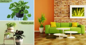 Room by room guide to decorate with plants