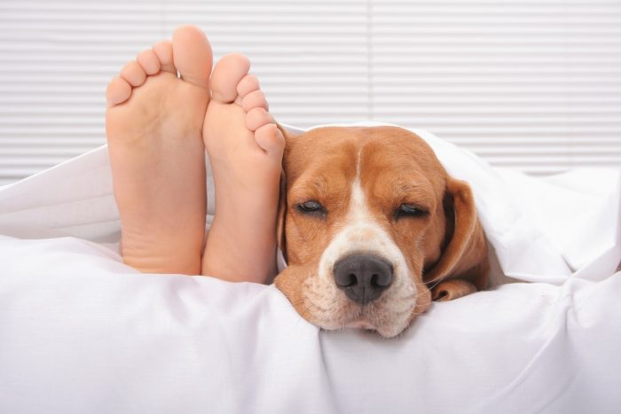 Cute dog in bed next to kid's feet