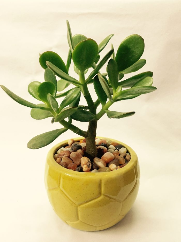 The Best Houseplant For Your Zodiac Sign - Homebliss Zodiac Houseplant on