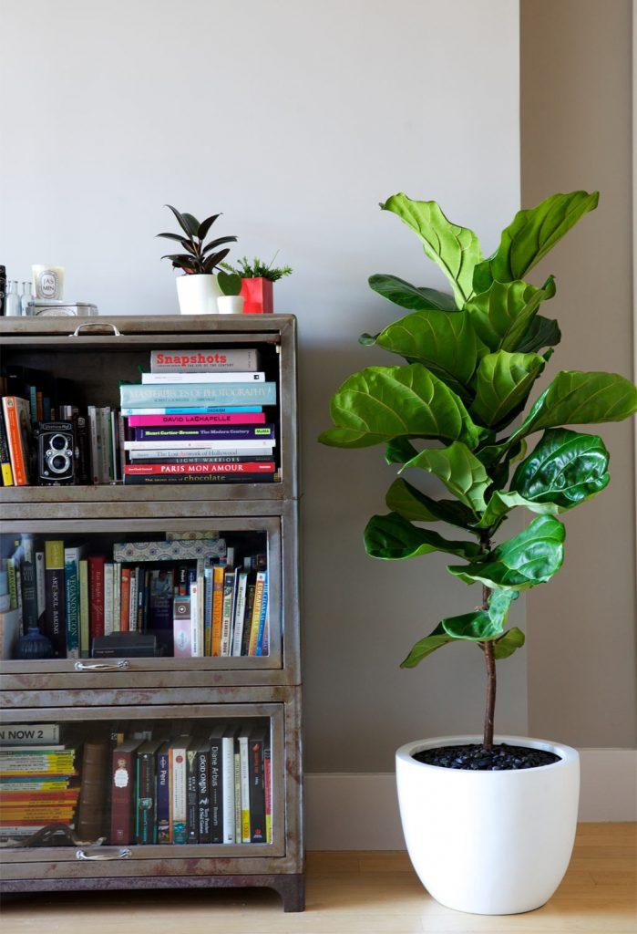 Indoors Plants Fill Empty Corners