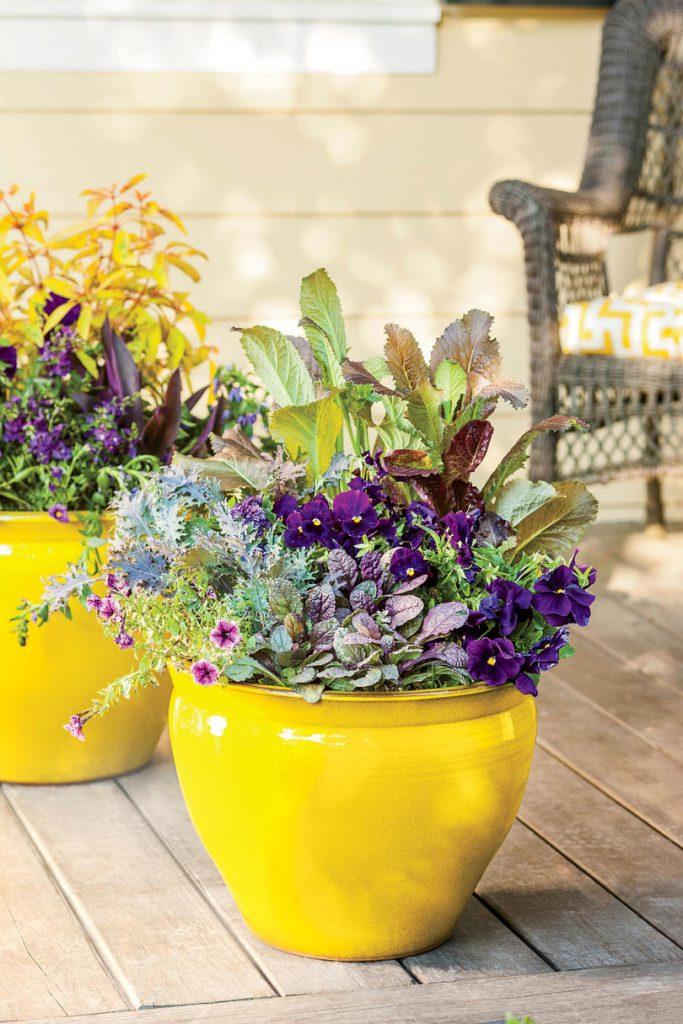 Indoors Plants Creative Crockery