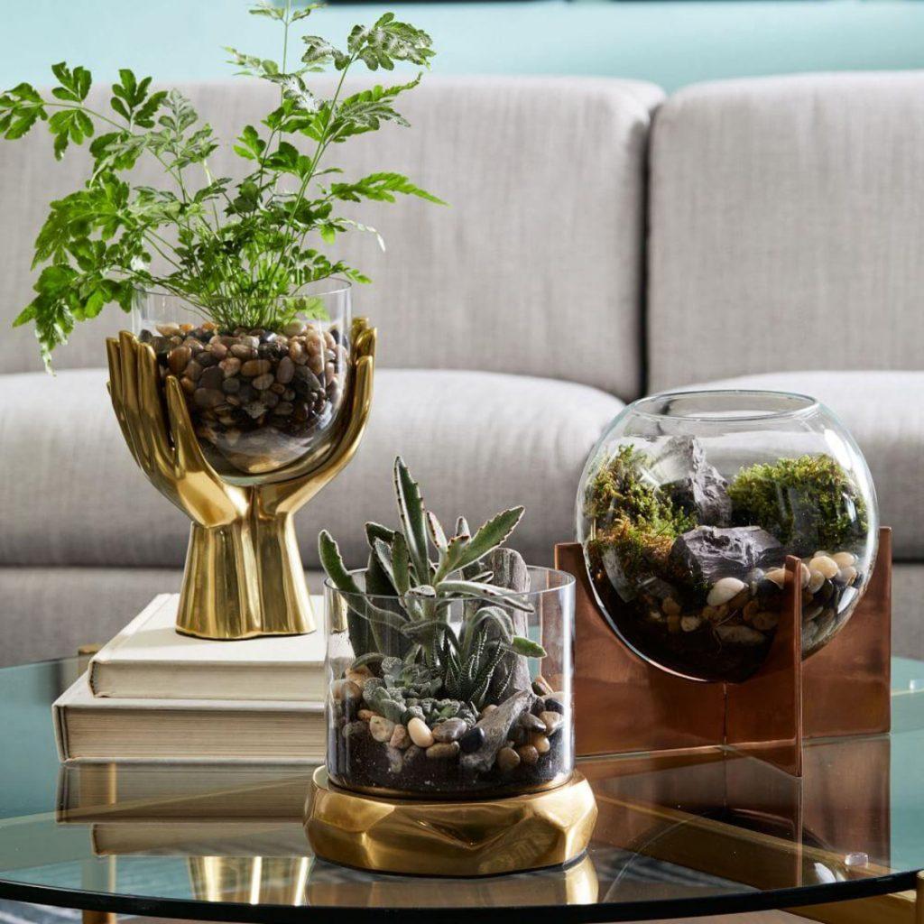 Indoors Plants Tabletop Terrariums