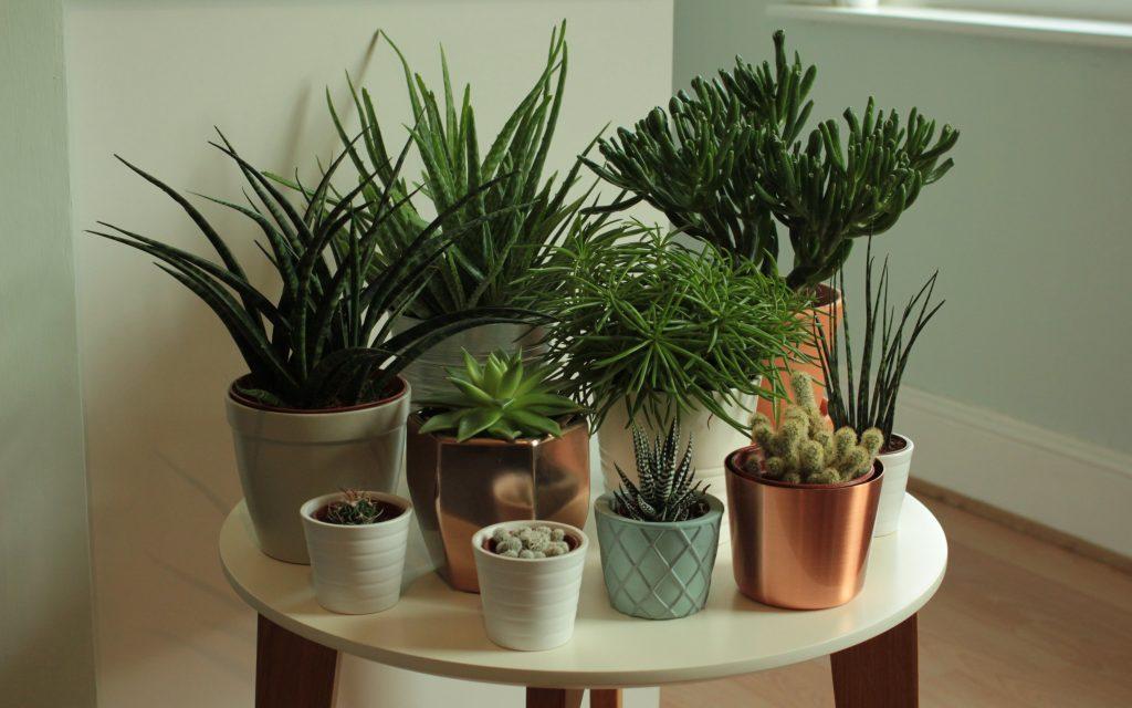 Indoors Plants Succulent Garden