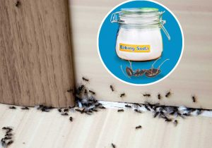 How to get rid of ants - baking soda