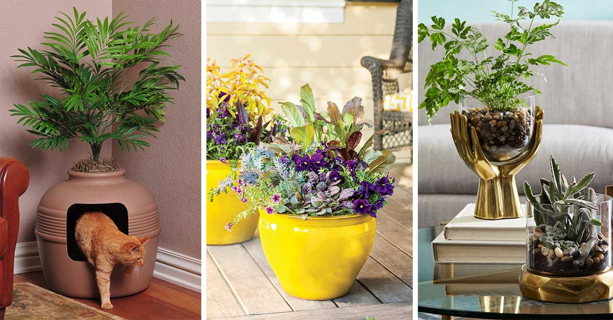 Home Decor with Indoors Plants
