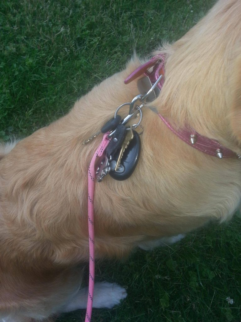 Home Hacks You Must Try Put Your Dog's Collar To Good Use
